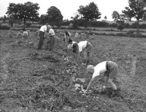 children working in field