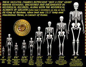 GIANT-SKELETONS-CHART